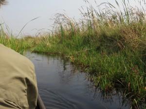 mit dem Morokoro im Okavango-delta