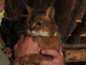 Erika's Katze